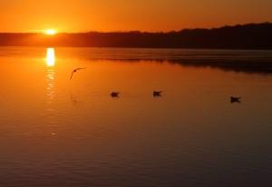 Solopgang, sø og måger