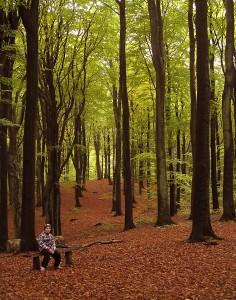 Marselisborg Skov, efterar