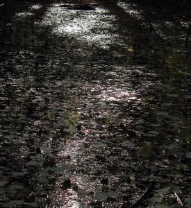 Refleksion i oversvømmet skovbund