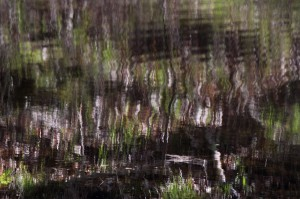 Refleksion i skovsø