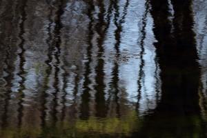 Skovsø reflektion